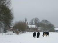 Bp05478-Lathum-kerk_sneeuw_koeien-300x225.jpg