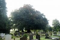 Bp06143-Vianen-Algemene-Begraafplaats1.jpg