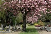 Bp05065Hengelo-begraafplaats-bloesem1.jpg
