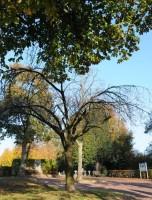 Bp11047-Heerlen-algemene-begraafplaats-kampstraat.jpg