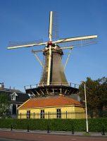 455px-Rotterdam_plasmolen_lelie.jpg